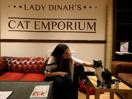 Britain Cat Cafe