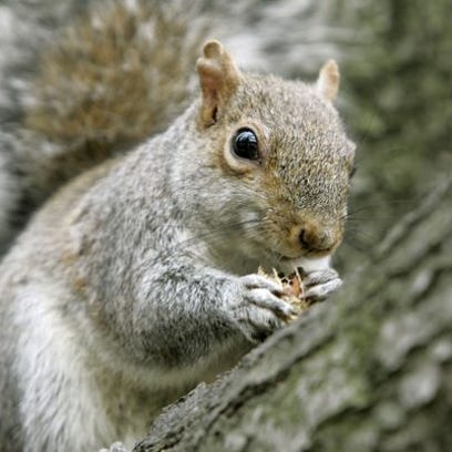 A squirrel has been blamed for a power outage Thursday