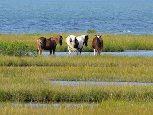 johnny s star gift guide assateague horse