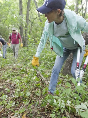 Tracy Pearsall of the Friends of Island Lake joins with other volunteers to clear brush and branches to make a new trail in the Island Lake Recreation Area.