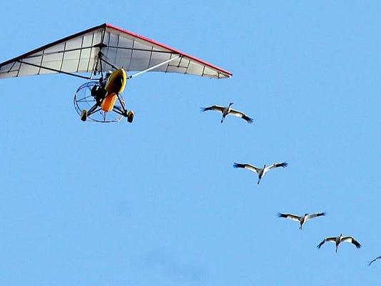 -Whooping Cranes11.JPG_20101215.jpg