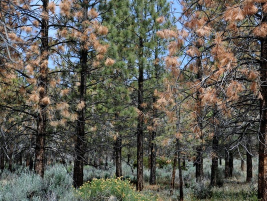 Los Padres National Forest