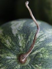 Love watermelon? Then head to the annual Watermelon Festival next weekend at Fleamasters Fleamarket.