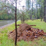 County moves to collect forest slash piles