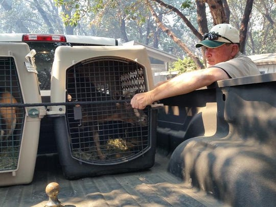 Goats are evacuated from the Soberance Wildfire