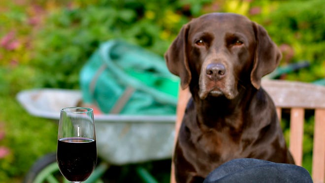 Dog can tag along with you on several wine trips in the Willamette Valley.