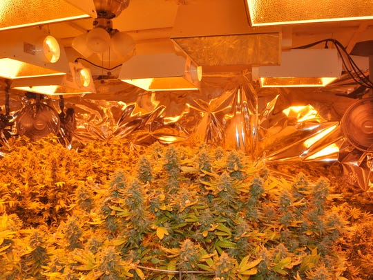 The investigation yielded a total of 31 marijuana plants (18 full-grown, 13 baby plants), weighing a total of 119.7 pounds, with a street value in excess of of $75,000 to $100,000 dollars and a large amount of drug paraphernalia used to support the cultivation operation.