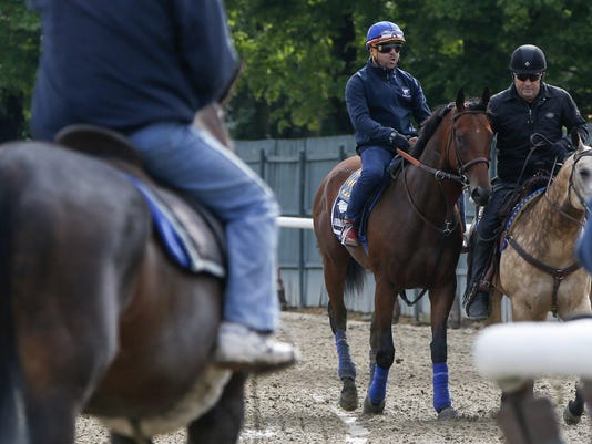 Kentucky Derby and Preakness Stakes winner American Pharoah leaves the track following his morning workout at Belmont Park in Elmont, New York