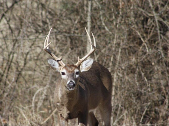 A plan to control Hendersonville's deer population divided the community this year.