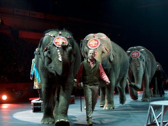 Animal trainer Ryan Henning parades the elephants around