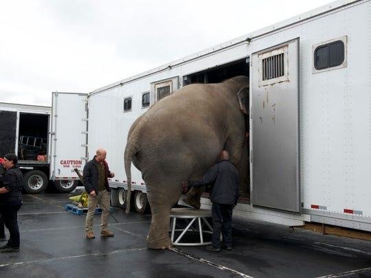Animal trainer Ryan Henning helps load elephants into