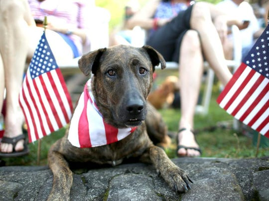 A patriotic dog sits along the parade route during