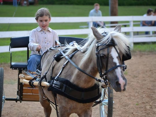 In the Youth Halter class, Cilla Neal, daughter of club president Deedra Neal, guides her pony Smoke.