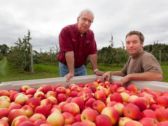Steve and Jeff Wood stand with a collection of SweeTango apples. Wood Orchard in Egg Harbor is the only Wisconsin orchard to grow and sell the apple.