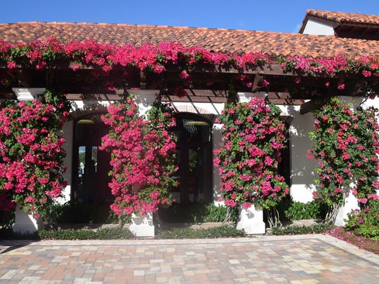 Bougainvillea hang along Fiona's Café at Talis Park.