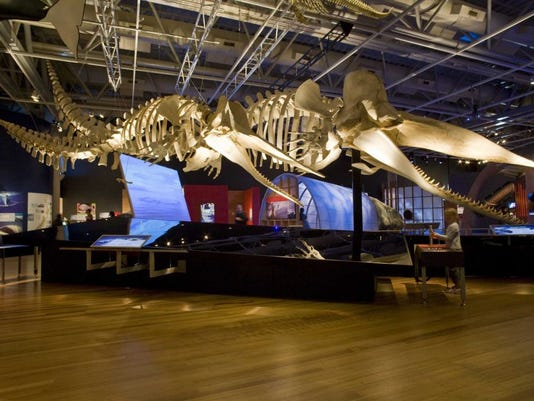 -Whales-Giants-of-the-deep.jpg