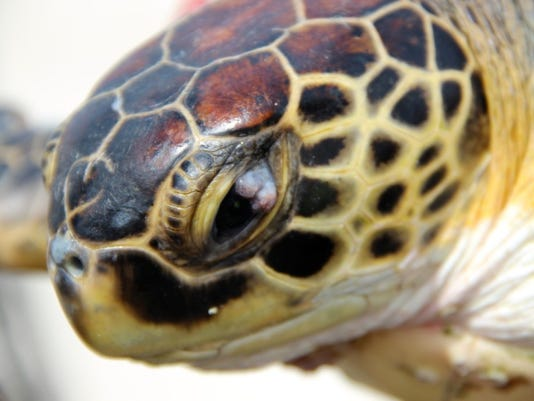 Turtle tumors