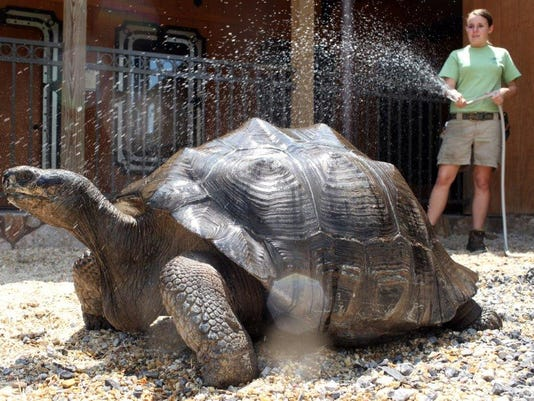 636402358104834499-HATBrd-07-28-2015-American-1-A001--2015-07-27-IMG-hot-weather-zoo-27-2-1-JKBFCPHQ-L649964265-IMG-hot-weather-zoo-27-2-1-JKBFCPHQ.jpg