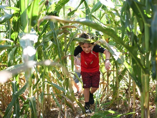 The Eliada Home corn maze opened for the season on Saturday.  Also featured at the maze is a bounce pillow, corn pit, slides, tractor rides, and more.