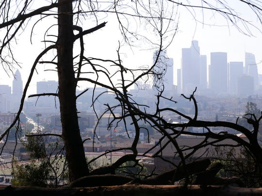 In this Dec. 14, 2017 file photo, Los Angeles skyline is seen through burned trees after a brush fire erupted in the hills in Elysian Park in Los Angeles. California's water managers are saying it's too early yet for fears that the state is sliding back into its historic five-year drought.