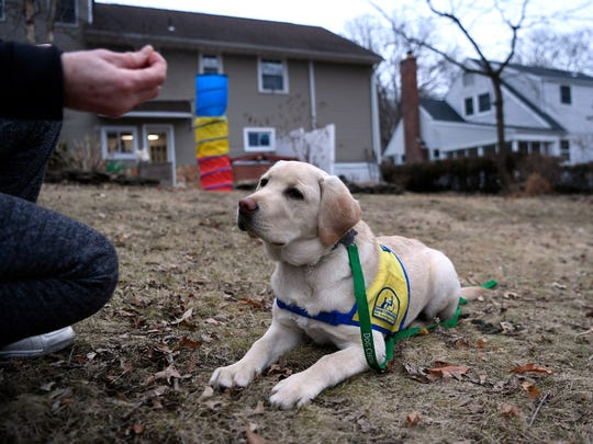 Mary Arguello holds up a treat as she instructs Maddie, a 4-month-old Labrador and golden retriever mix, to sit and stay in her backyard in Tenafly on Jan. 29, 2018. Arguello and her family are fostering Maddie for Canine Companions, which trains service dogs for disabled people.