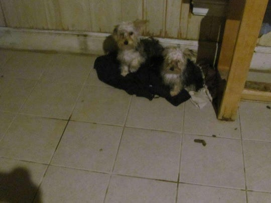 Conditions at a Plainfield home where neglected puppies