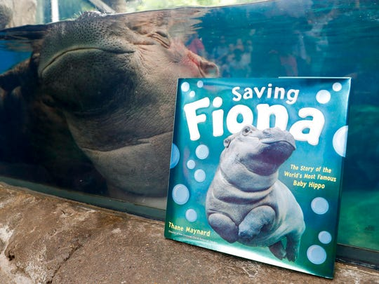"Fiona sleeps in her enclosure beside a copy of ""Saving Fiona."""
