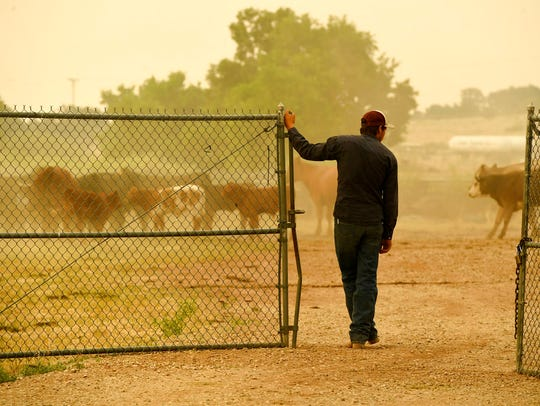 Ty Warren leaves a pen where his father's cattle are