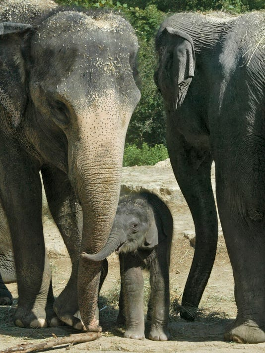 Baby Elephant, Ellie