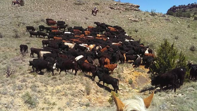 Cattle range on a local ranch.