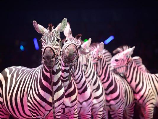 635832073117685450-zebras