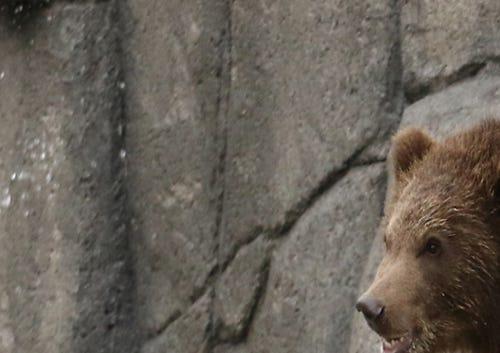 New bears, new exhibit