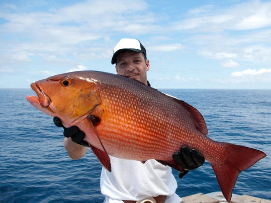 red snapper fishing regulations essay Information about the red snapper (lutjanus campechanus), a species found in  the  snapper description: regulated nongame species - see bag & size limits.