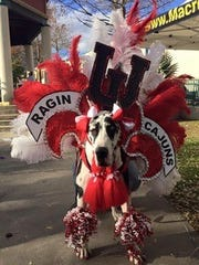 Dogs and owners alike get festive for the Krewe des