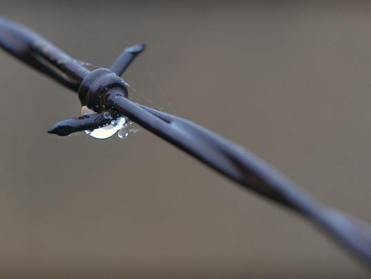 Barbed Wire Rain