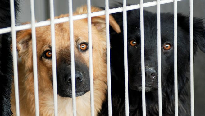 File photo of two dogs in an animal shelter.