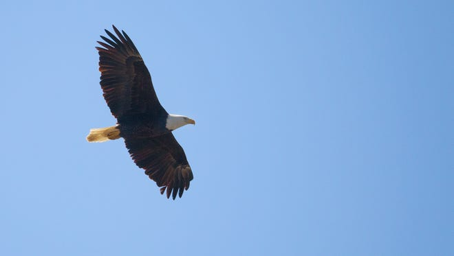 The annual eagle-watching event known as Eagle Days takes place this weekend at Lake Springfield and the Conservation Nature Center.
