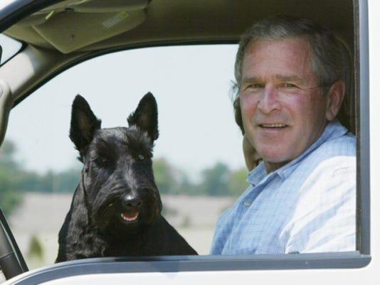 Bush Barney.jpg