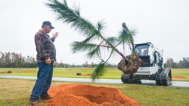 Santa Rosa County employee Doyle Godwin directs a Longleaf Pine tree into place in Bagdad Mill Site Park in Bagdad on Monday, December 5, 2016.  One hundred forty seven trees native to the Bagdad area are being planted at the park.