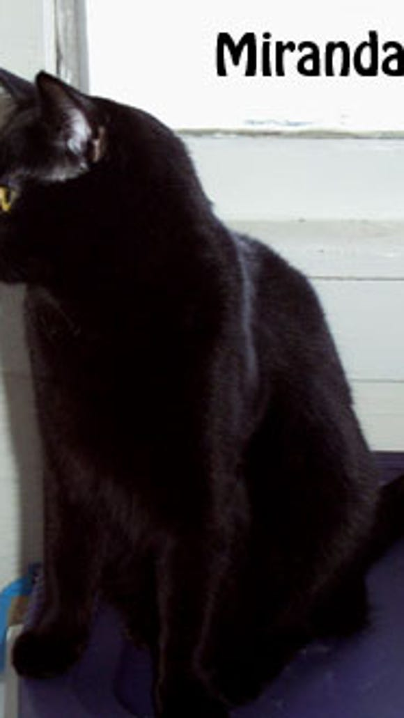 blackcat-miranda