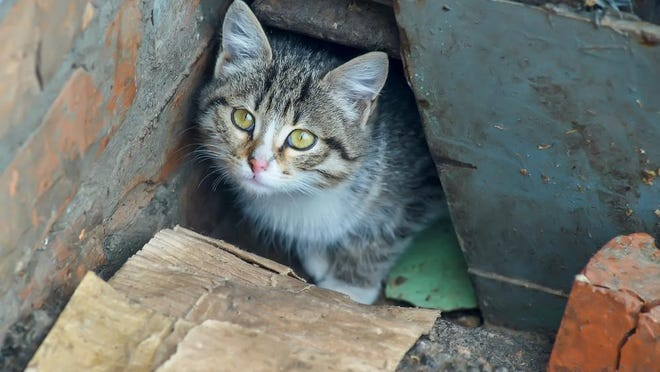 Stray cats are causing problems for some city residents. Opinions differ on how to handle the issues.