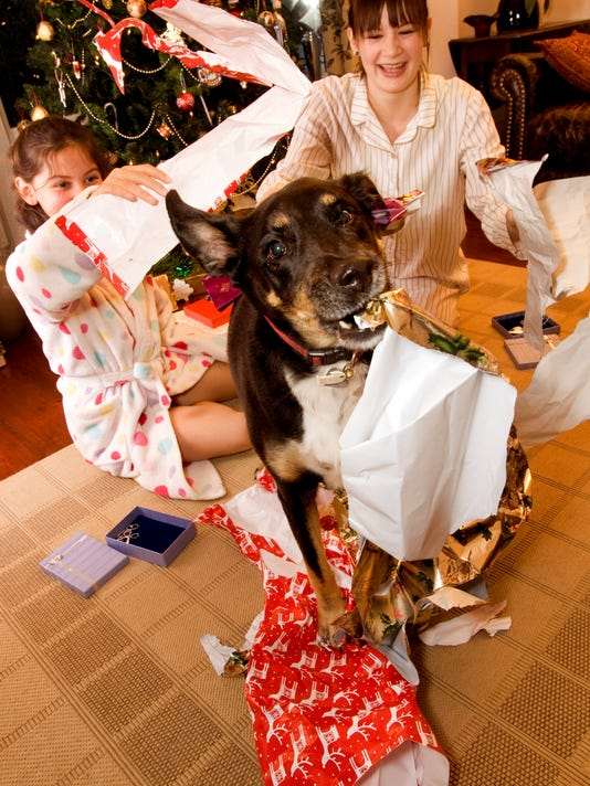 kids and dog playing in gift wrap