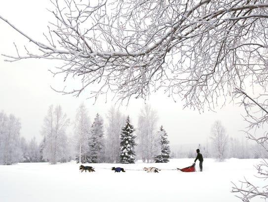 A dog team cruises along a trail in Fairbanks, Alaska,