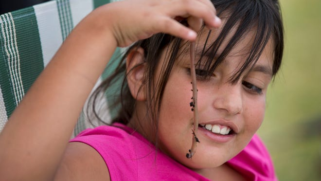 Ailiana Reyes, 8, of Guadalupe, uses worms to fish with at Kiwanis Park in Tempe on April 11, 2015.