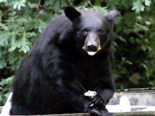 635623945861530666-bear-COURTESY-TWRA