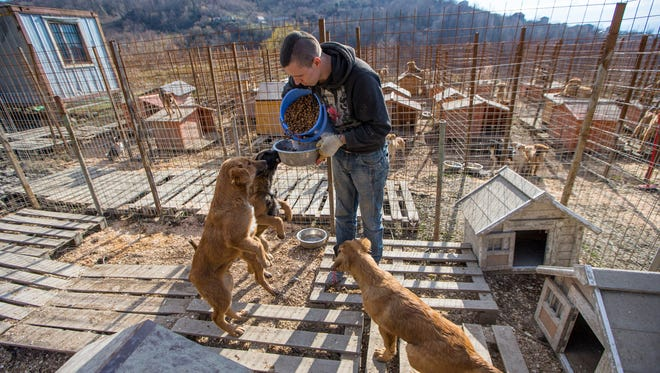 Jenya Popov, 25, has been hired to live in a nearby aluminum shed with just a tiny cot, a stove heater and several bags of dog food. He cares for the strays, removed from the Olympic areas, in this shelter.