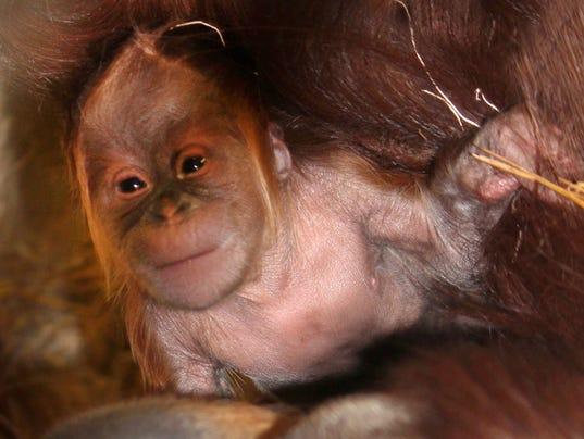 indianapolis zoo joins cuteanimaltweetoff  petition