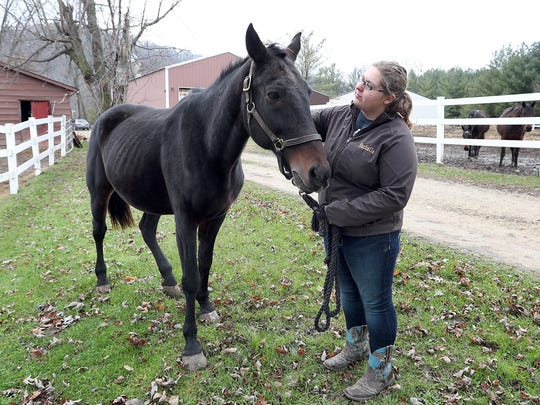 In this Saturday, Nov. 18, 2017, photo, Rachelle Craig, an American Standardbred Adoption Program volunteer, walks with Bob Again at the ASAP farm in De Soto Wis. Bob Again, a retired race horse, was saved from being sent to a slaughterhouse in Mexico after the woman who adopted him sold him off.