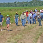 Participants at the Northeast rice field day, held south of Rayville, listen to LSU AgCenter experts giving advice on growing this year's crop.