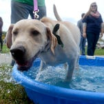A dog hops in the water pool Sunday during the annual Mutt March at Goodells County Park.